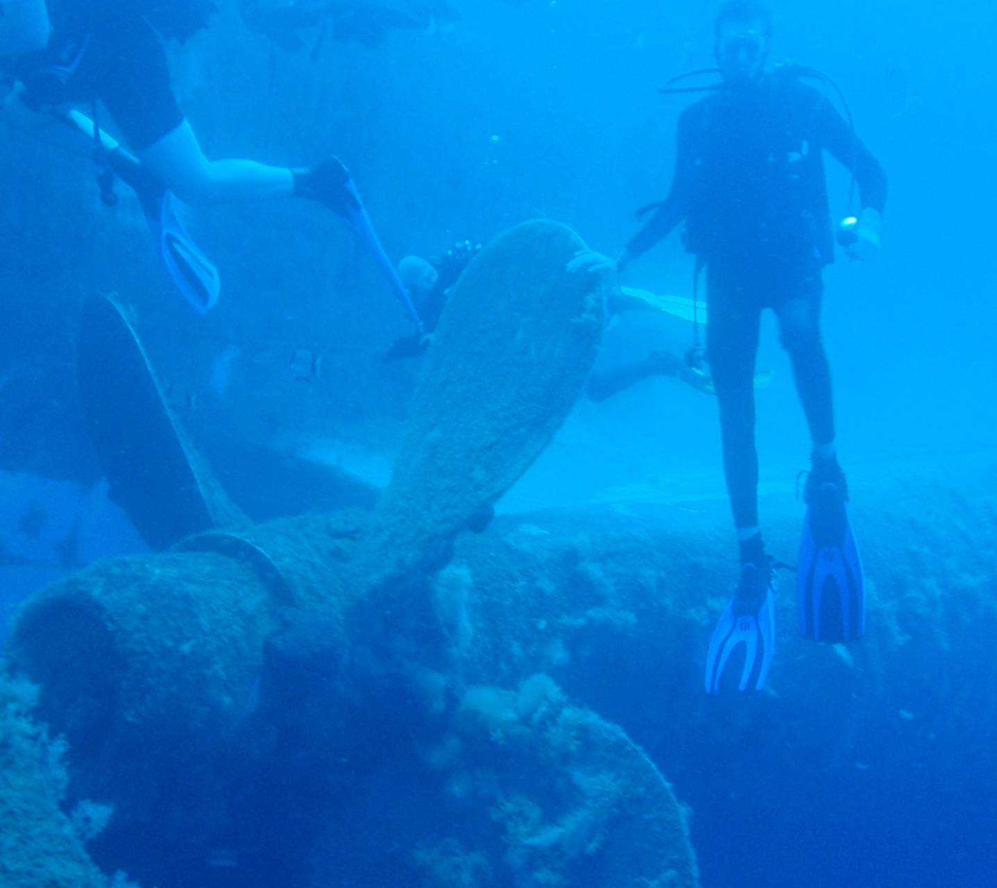 Zinobia diving