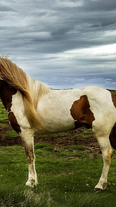 Captivating Horse