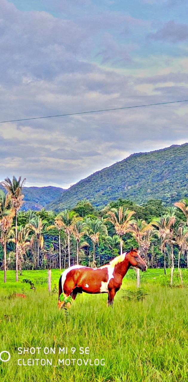 Cavalo fazenda
