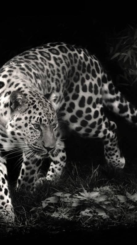 Photo Wallpaper Big Cat Eyes Panther Black Leopard