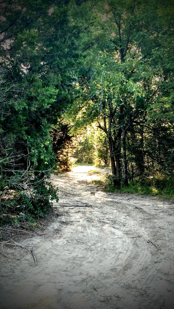 The forest door
