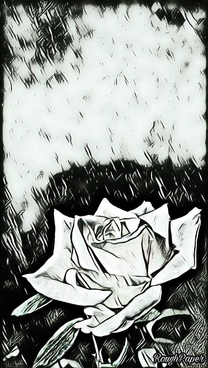 Rose Pencil Art