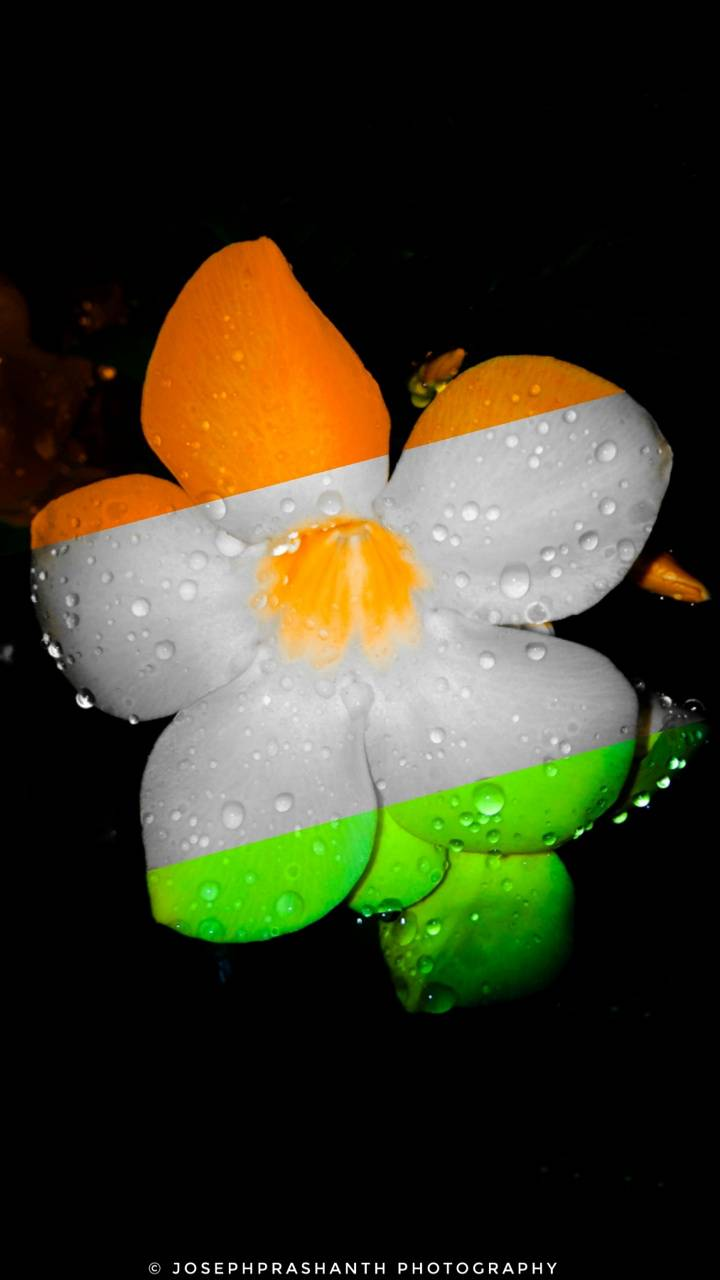 Indian Colour Flower