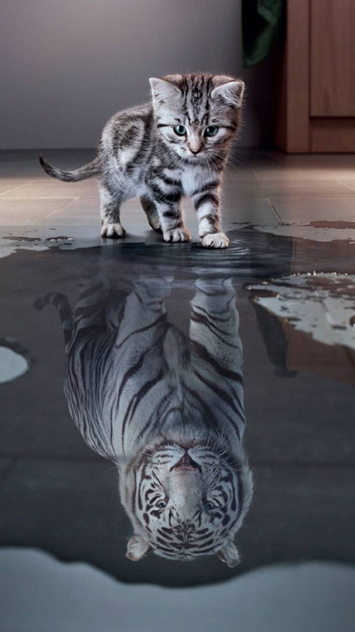 Cat And Tiger