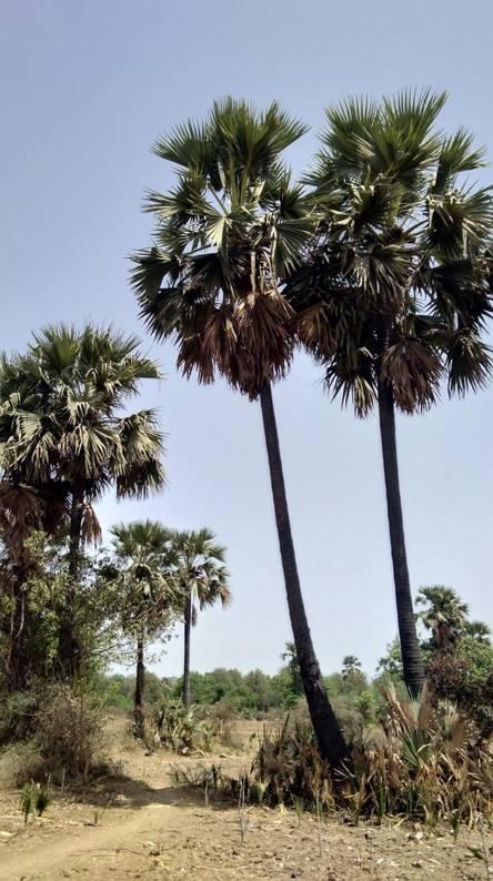 Gujarat fields