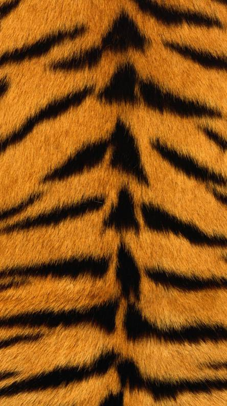 bengals tigers skin ringtones and wallpapers free by zedge