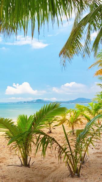 Sandy Sunny Beach