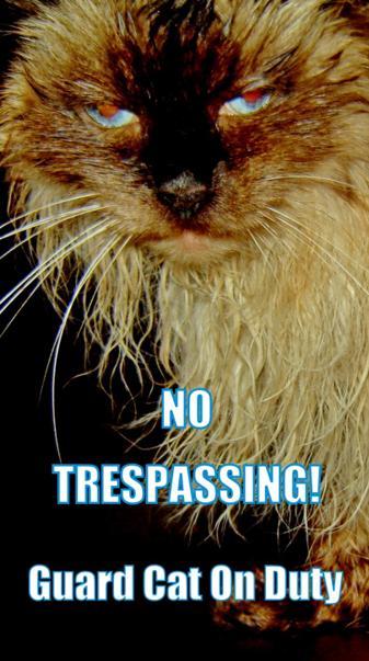 No Trespassing Cat