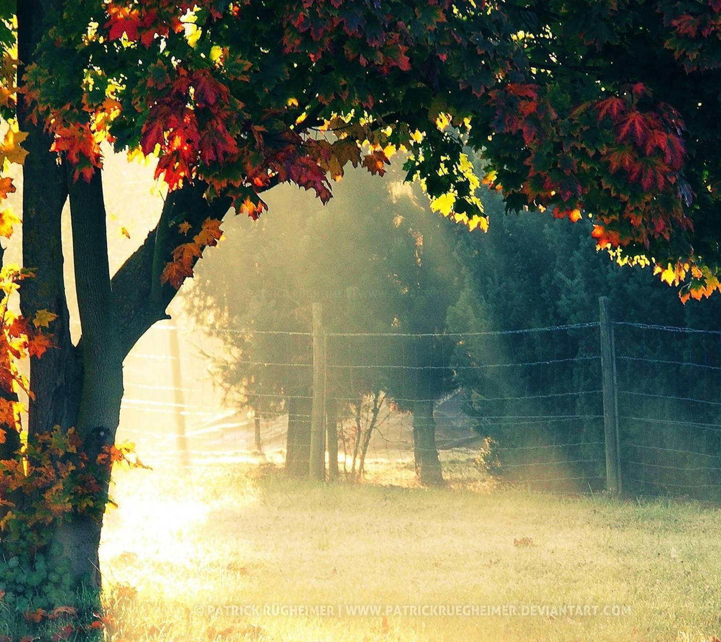 Autumn SunriseMornig