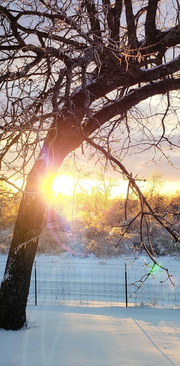 Snowy East TX sunset