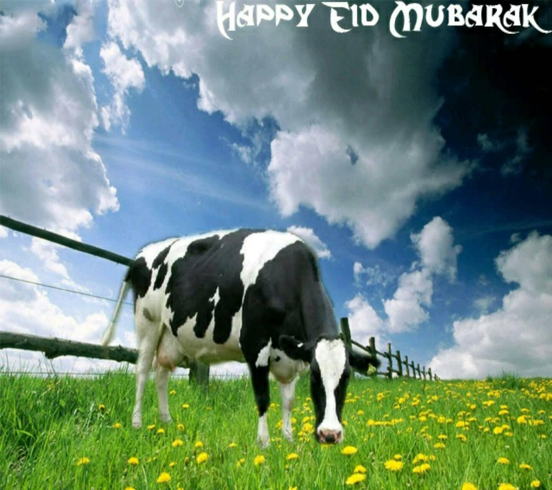 Happy Bakra Eid