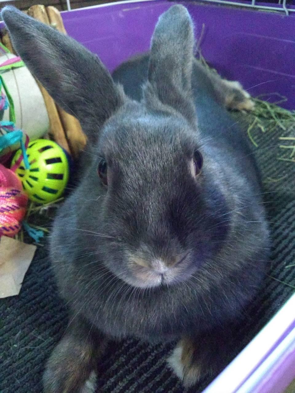 Grey rabbit bun
