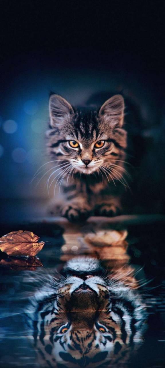 cat zedge cats
