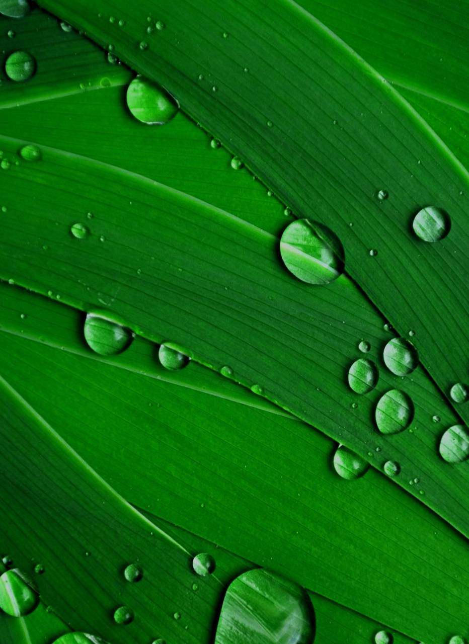 Water Drops S8edge