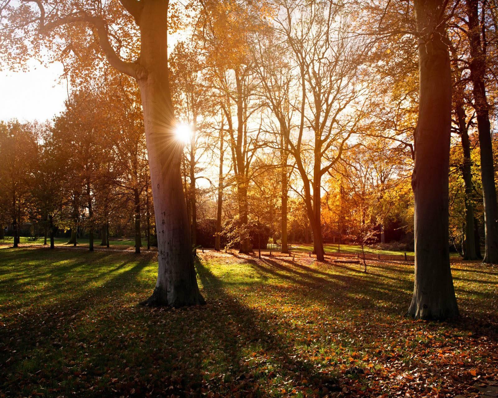 Nature Autumn