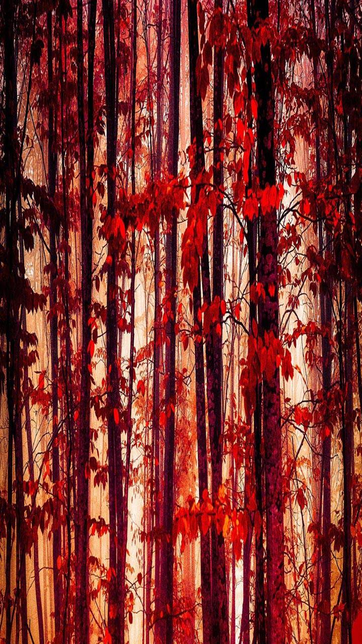 Forest Trees red