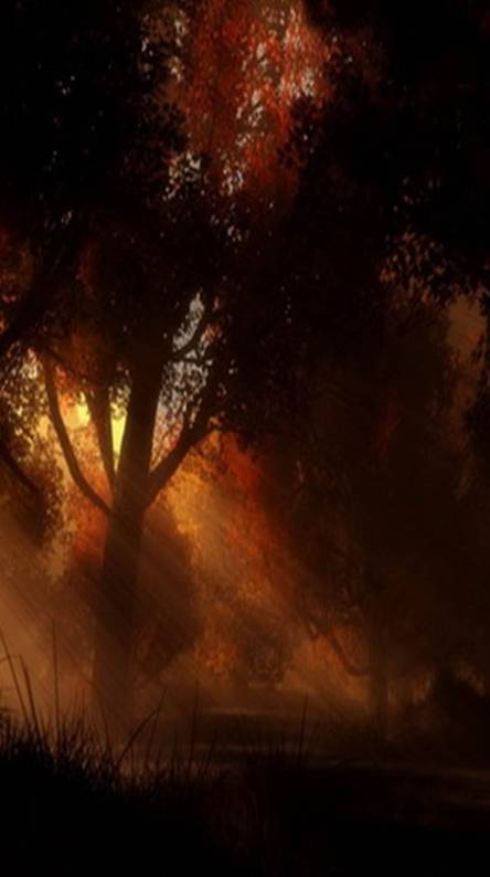 3d hd wallpapers free by zedge hd forest sunset voltagebd Gallery