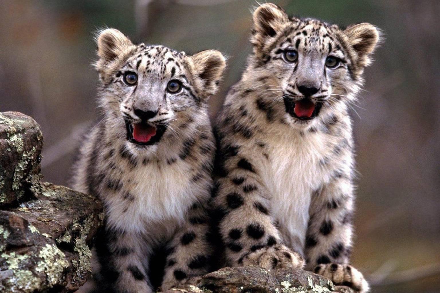 Amazed Kittys
