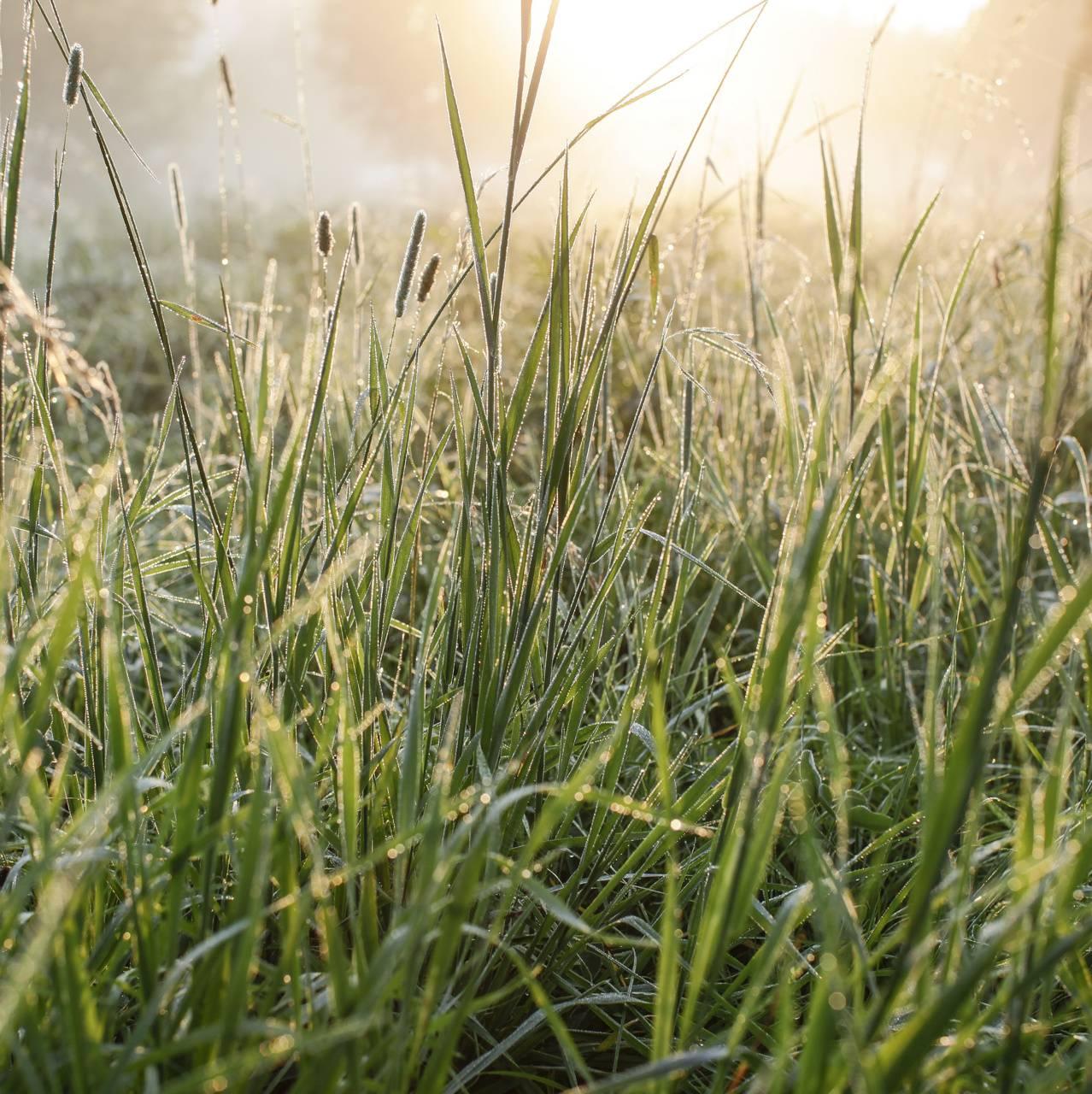 Autum Moist Grass