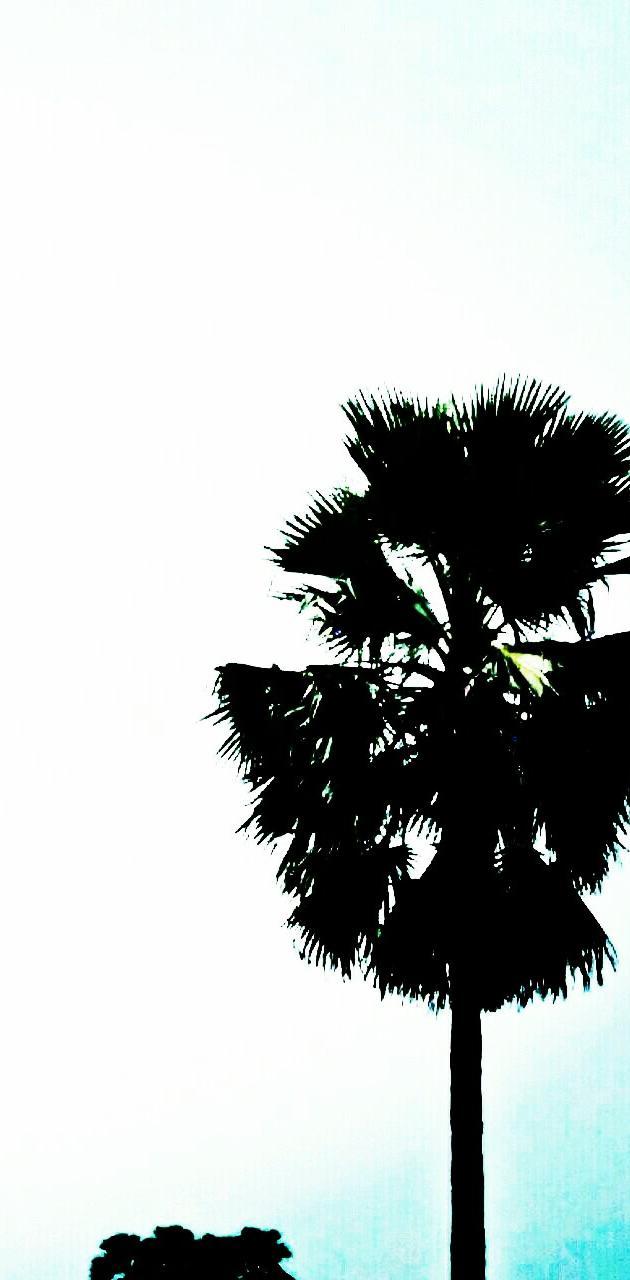 The rural palm