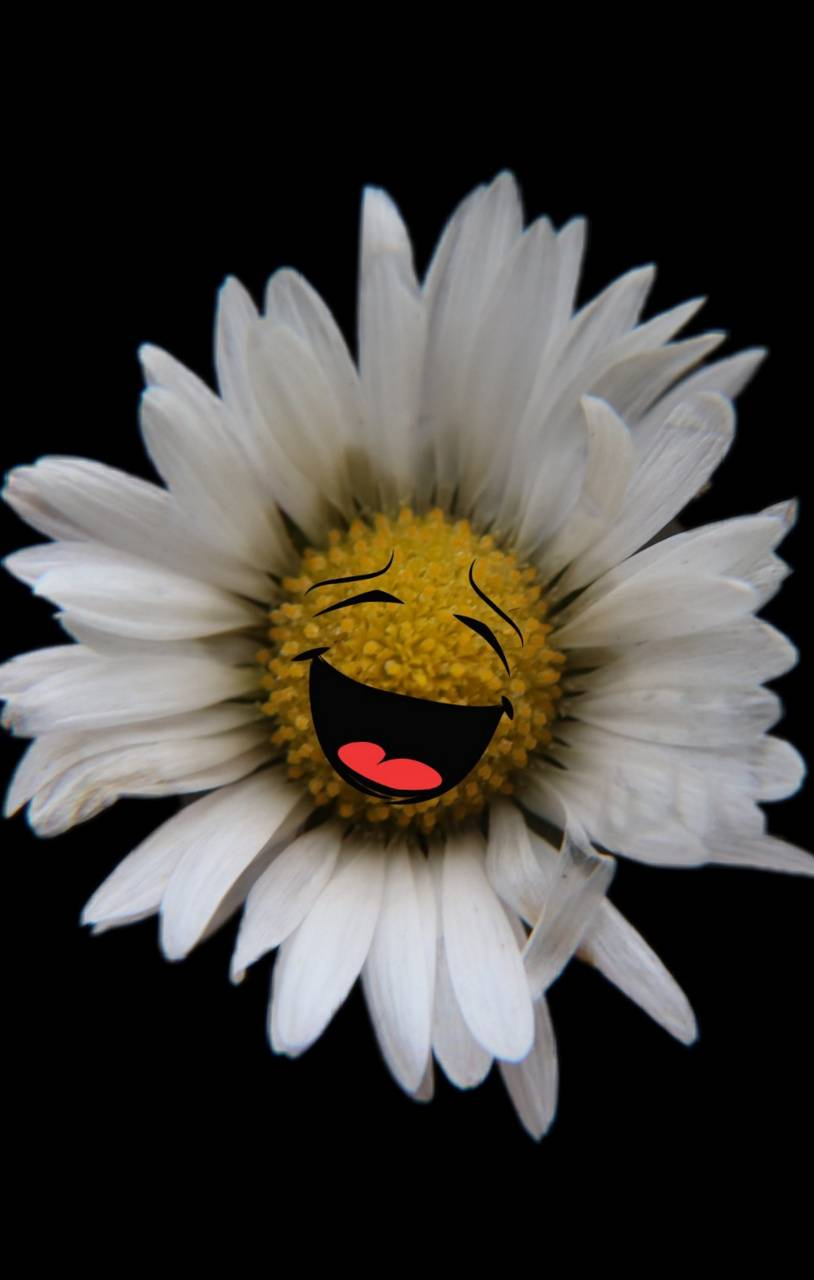 Laughing flower