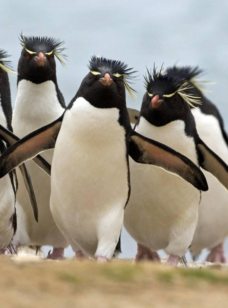 Hiphop Penguin Group