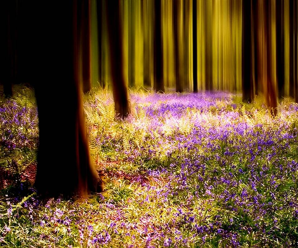 Magical Forrest