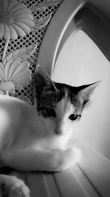 Adorable cat