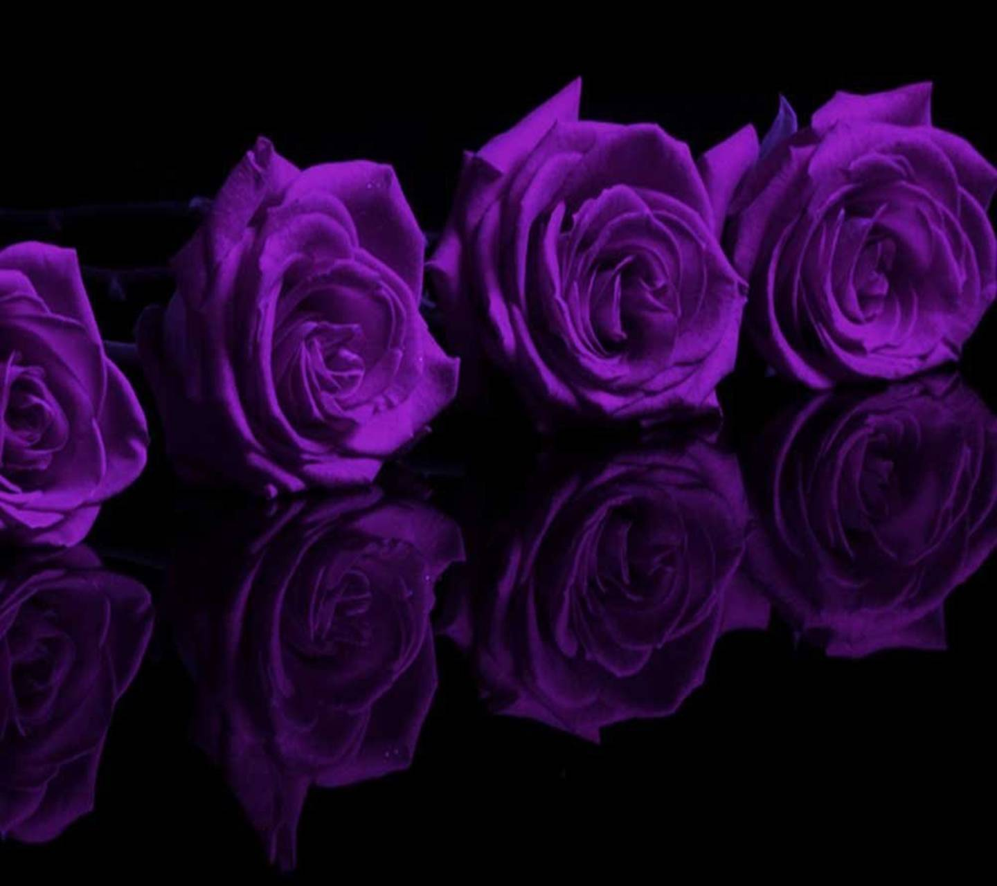 roses reflection