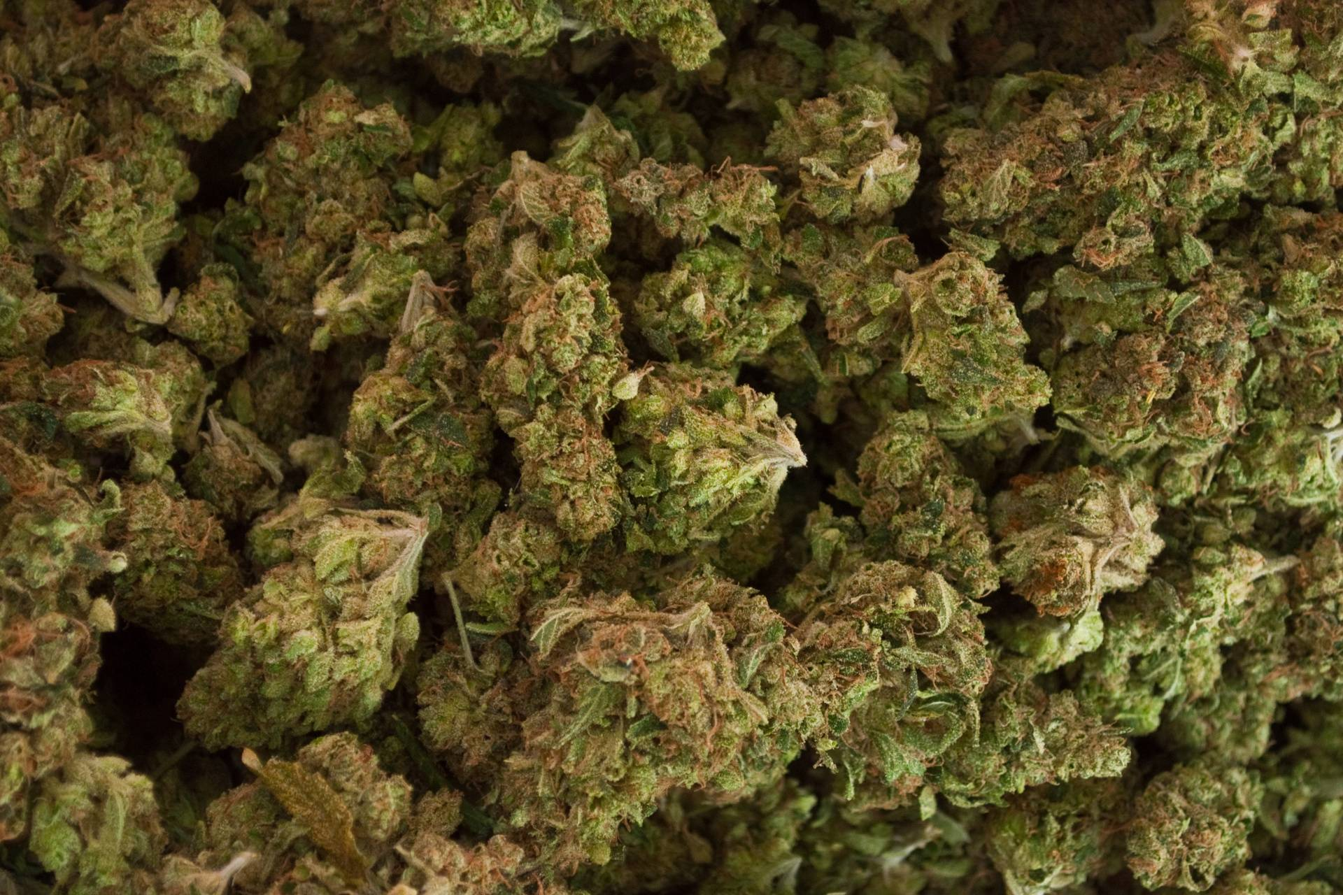 Leaf Buds