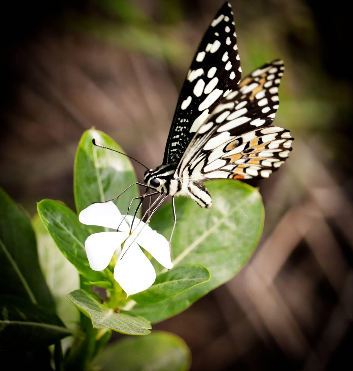 white flower nector