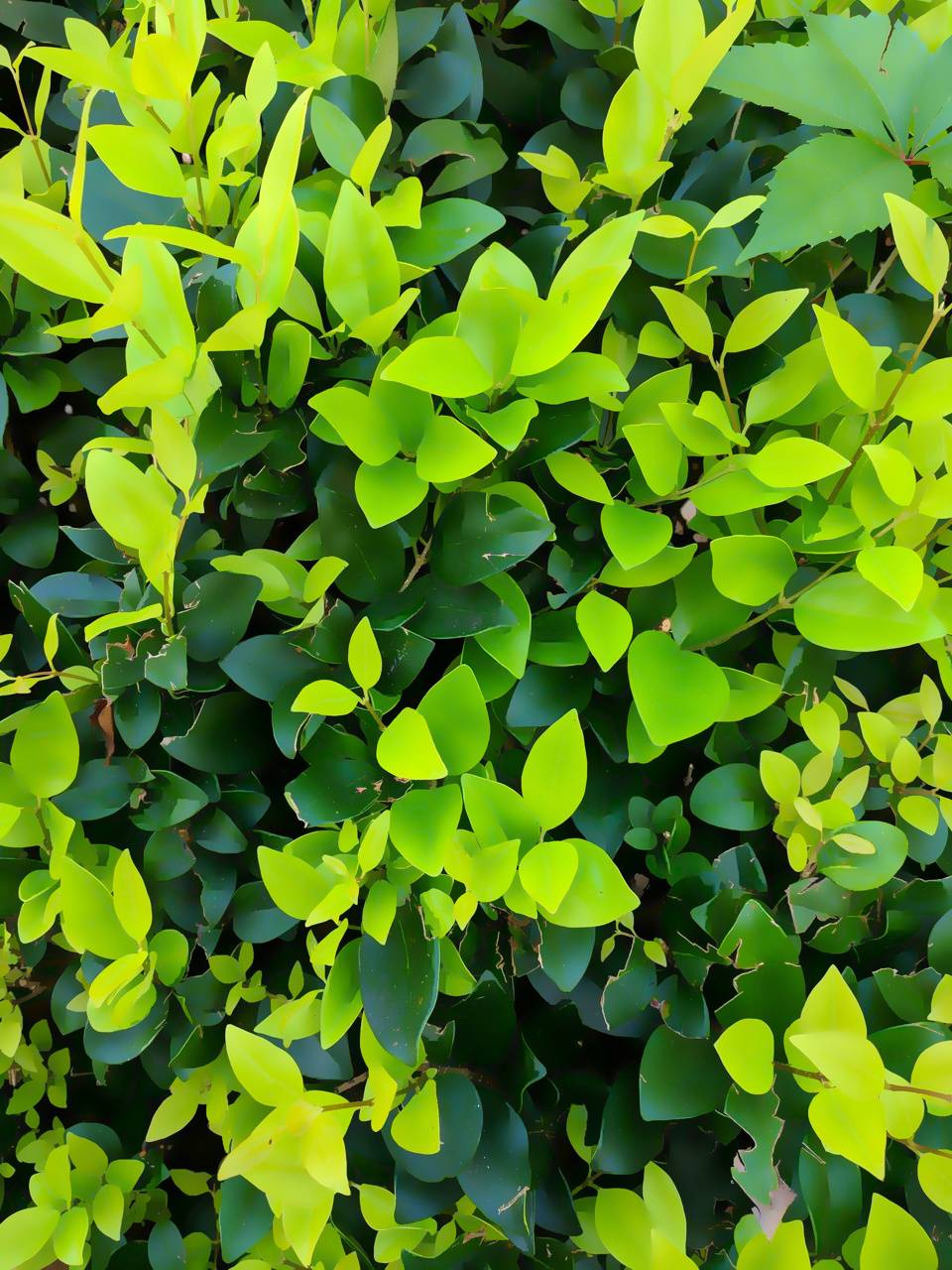 Green Leaves of Fall