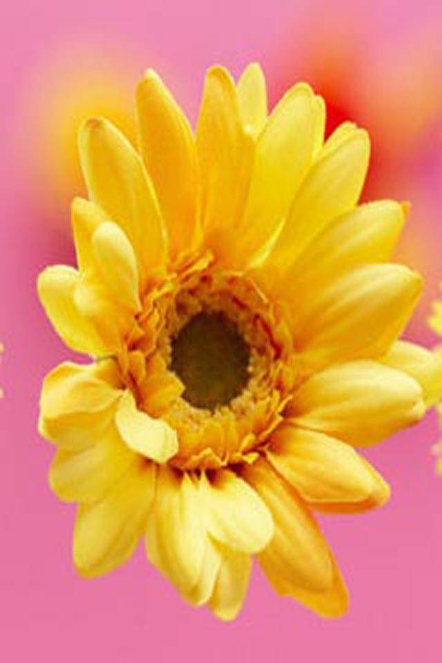 Lovely Sun Flower
