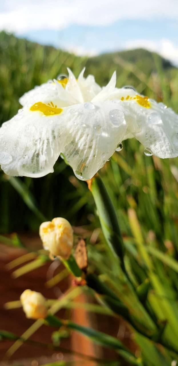 4k Blur Flower