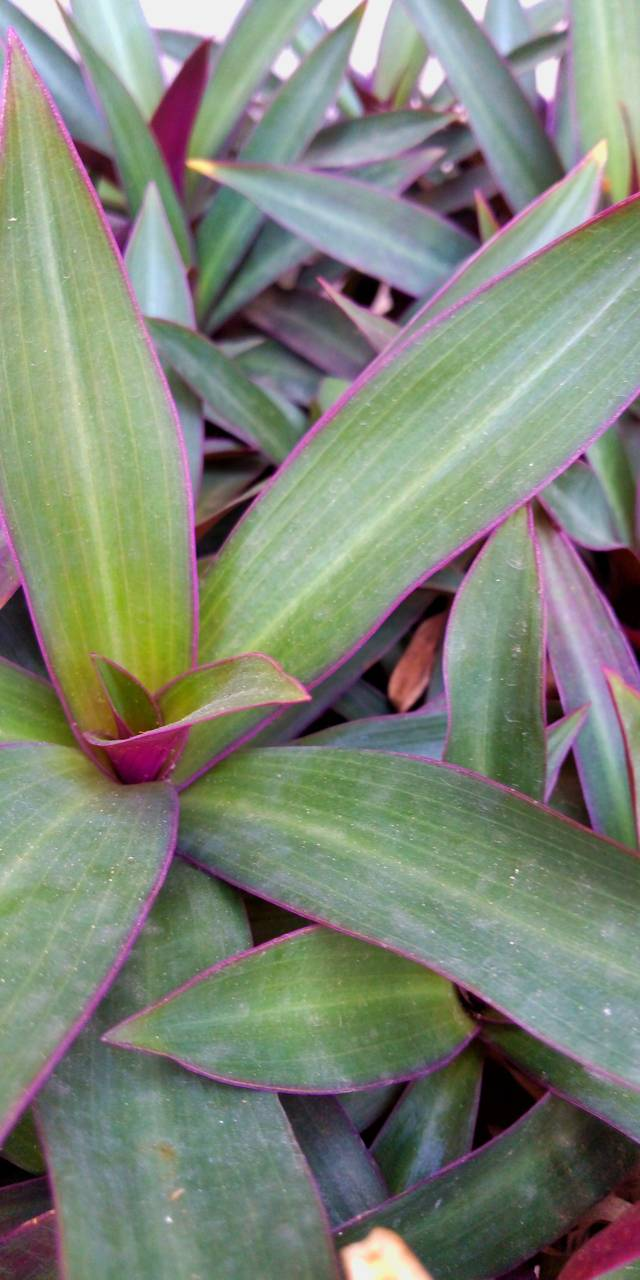 green leafs beauty