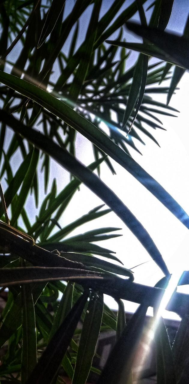 Beach coconut Sun