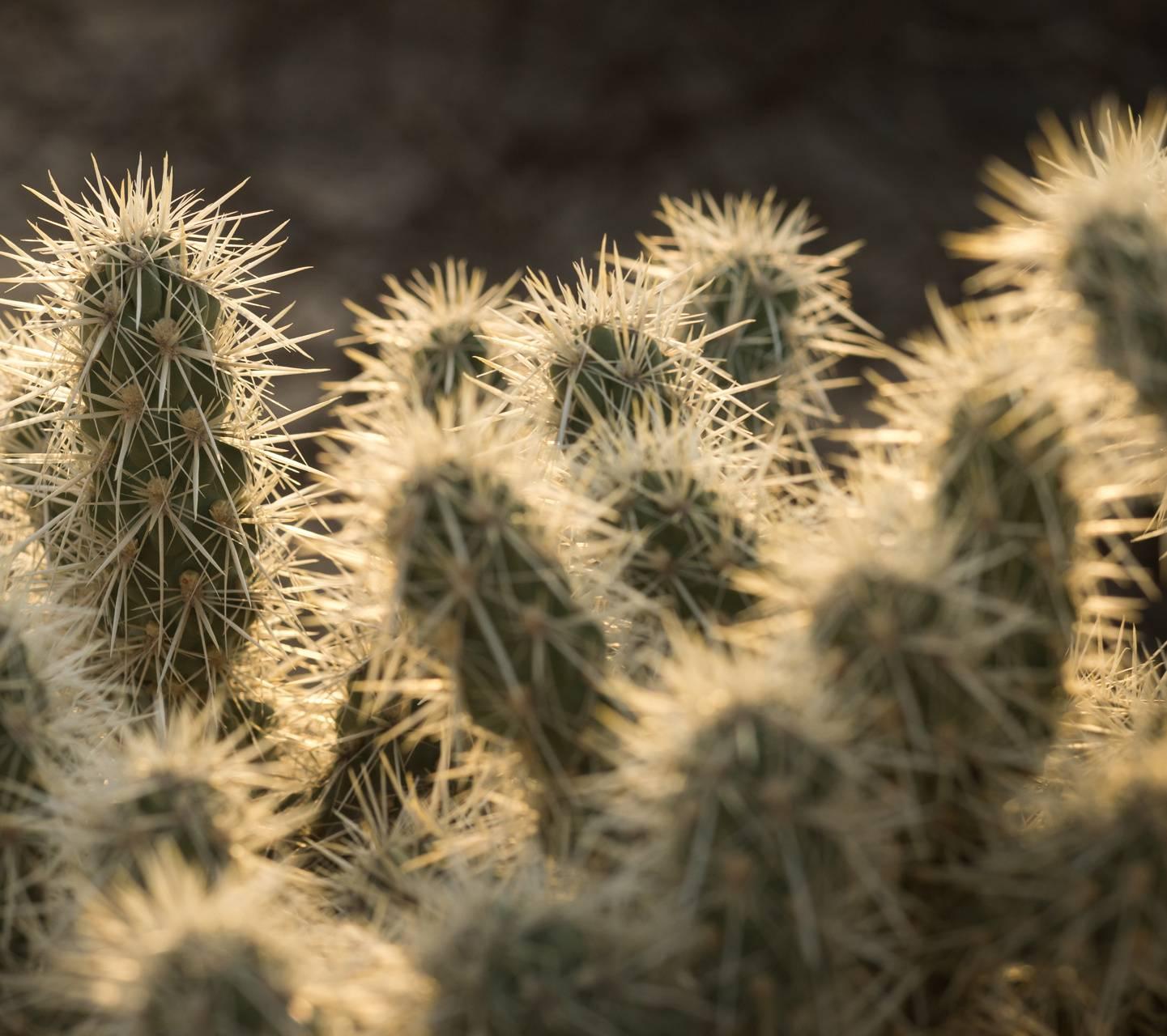 Cacti 5