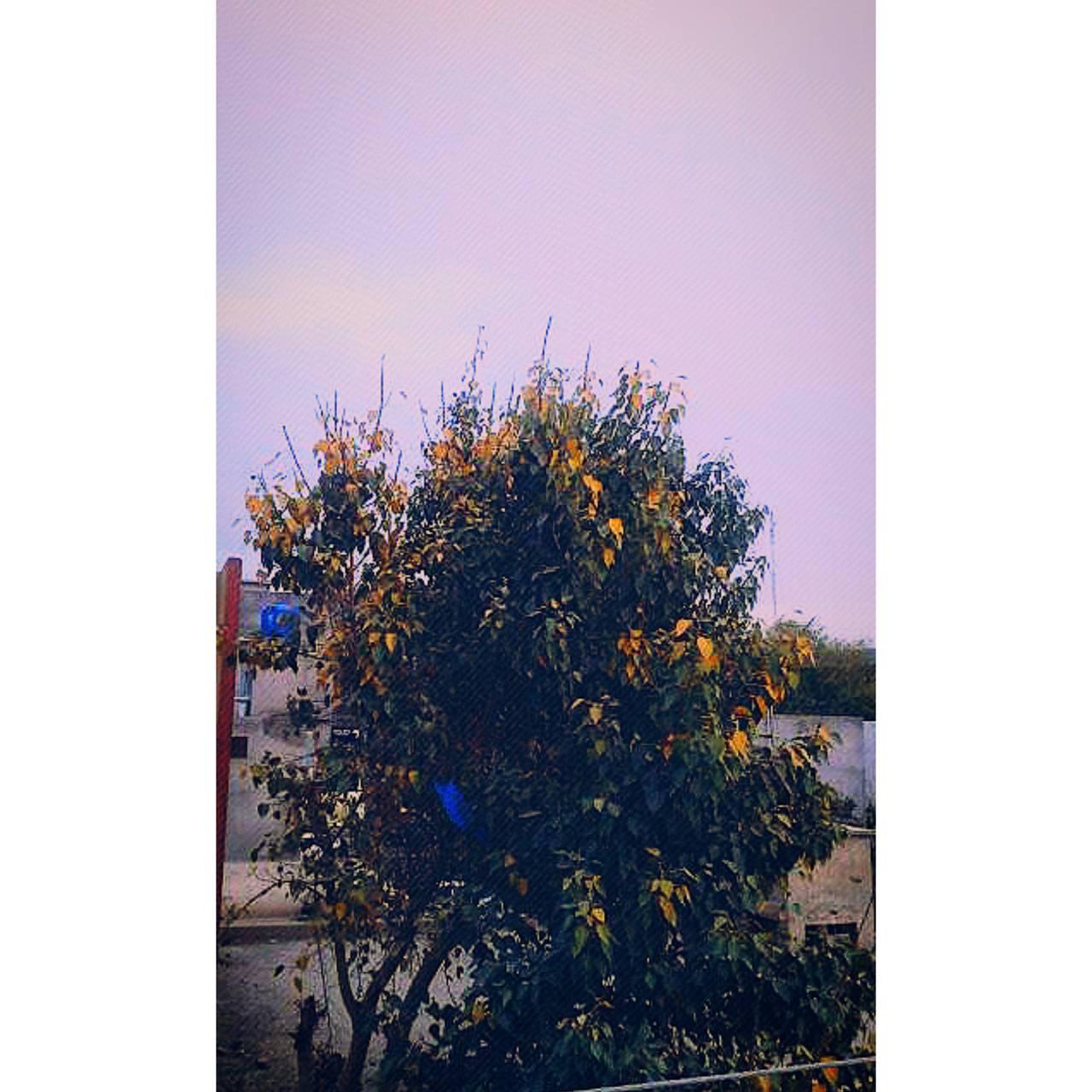 Tree beautiful