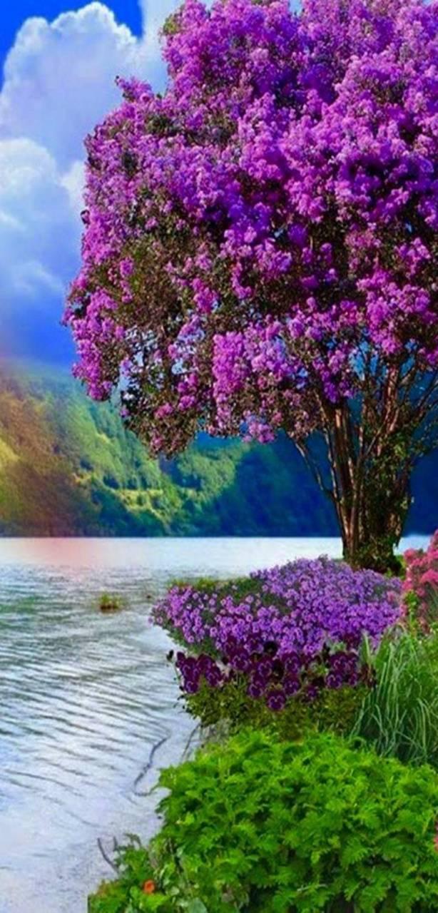 Nature tree