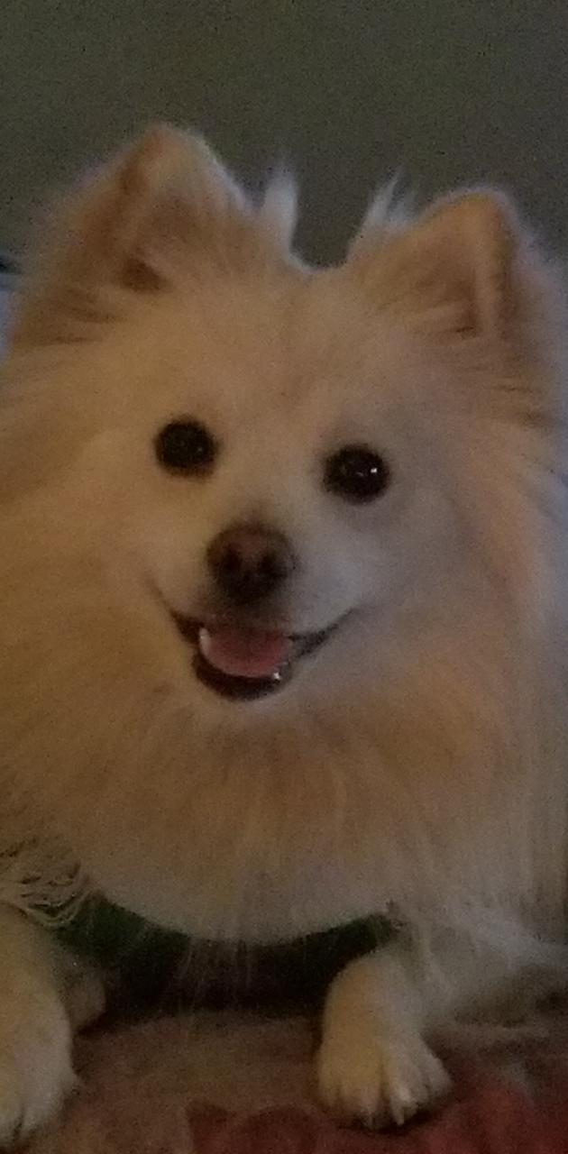 Happy Pompom Puppy