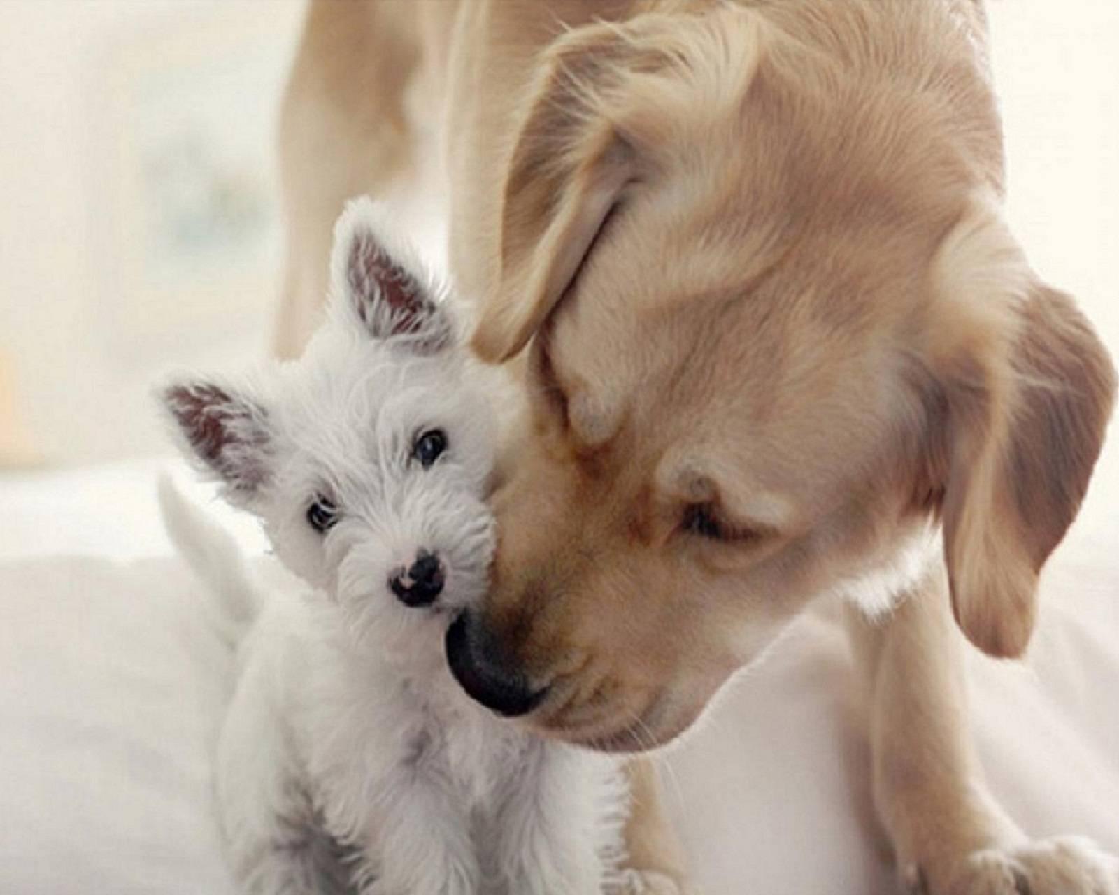 Картинки на аву собак и кошек