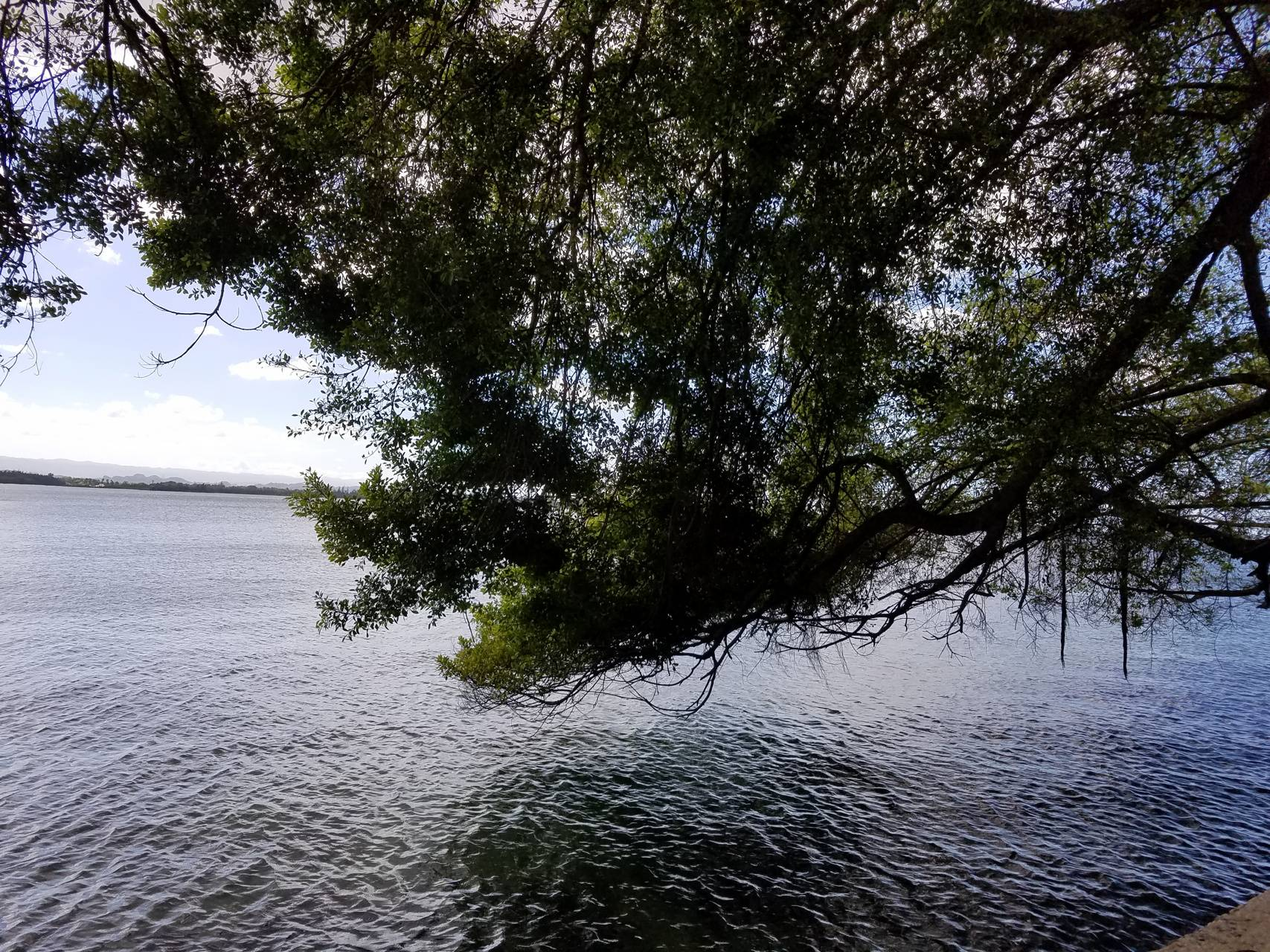 Tree by the water
