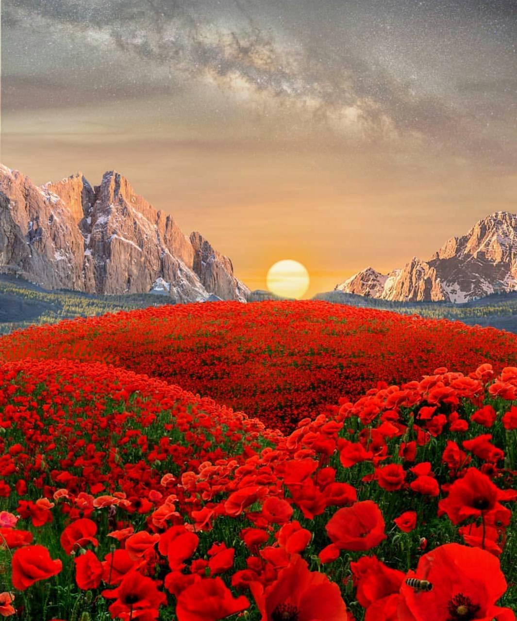 Flowery mountain