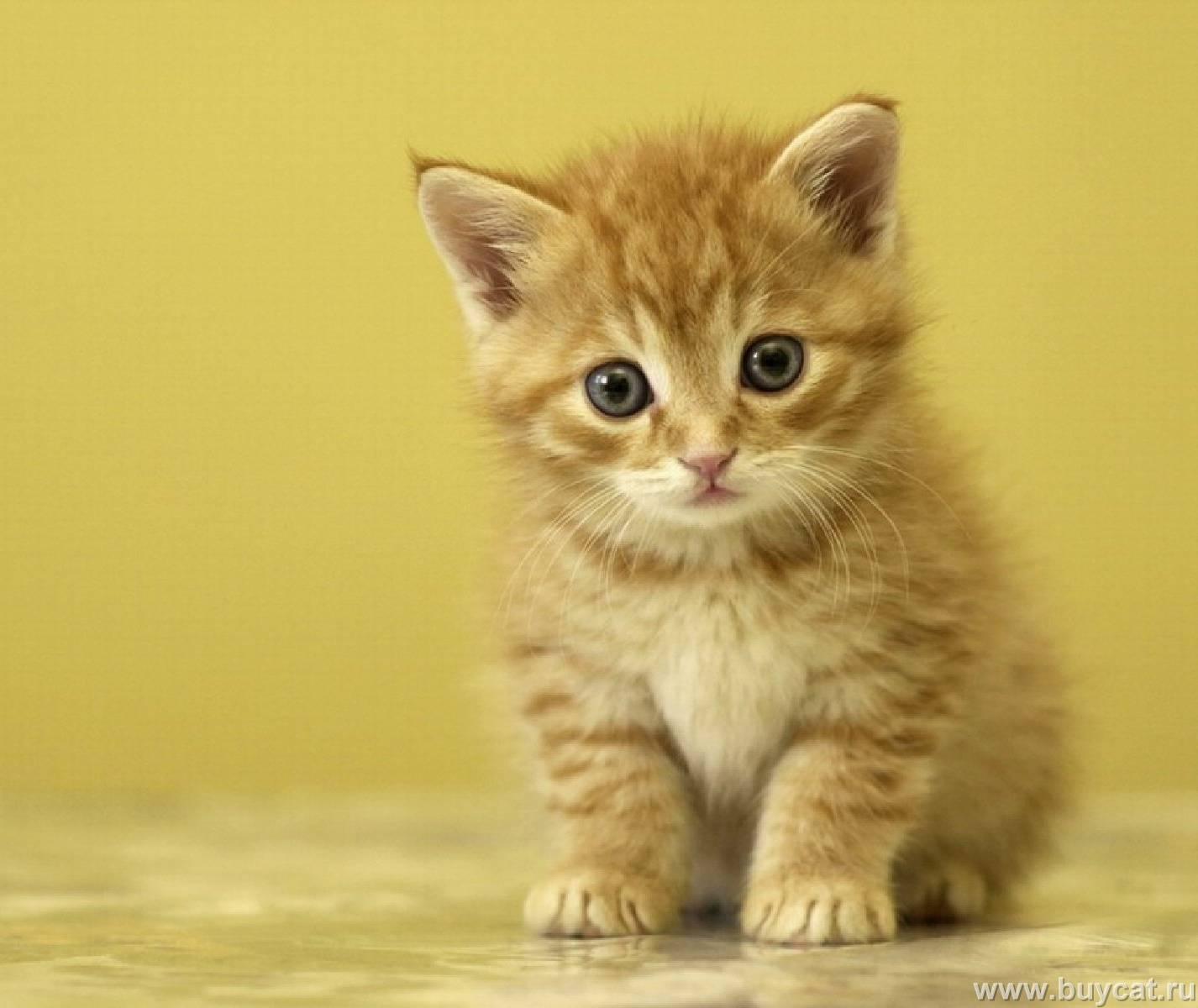 Wow Cute Cat