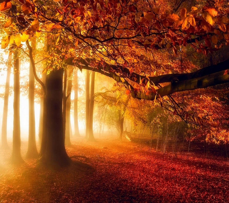 Morning autumn