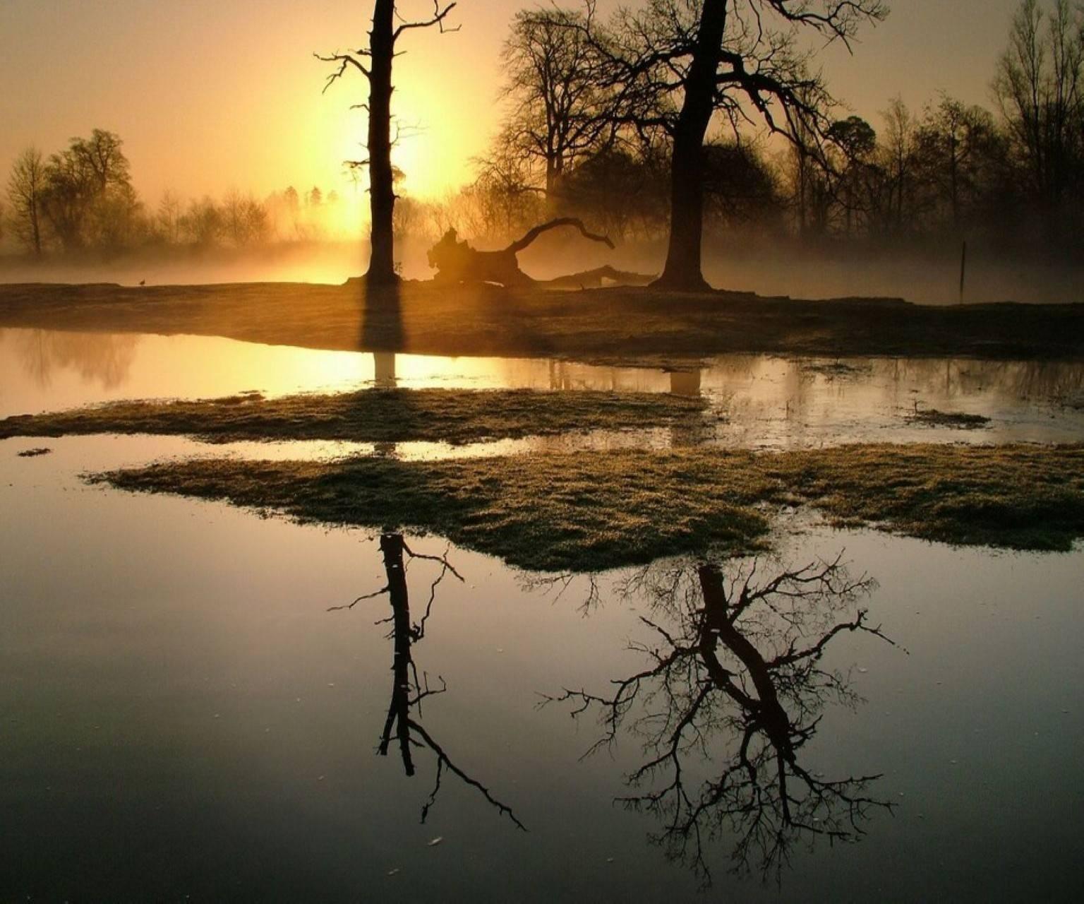 Forst Trees Sun