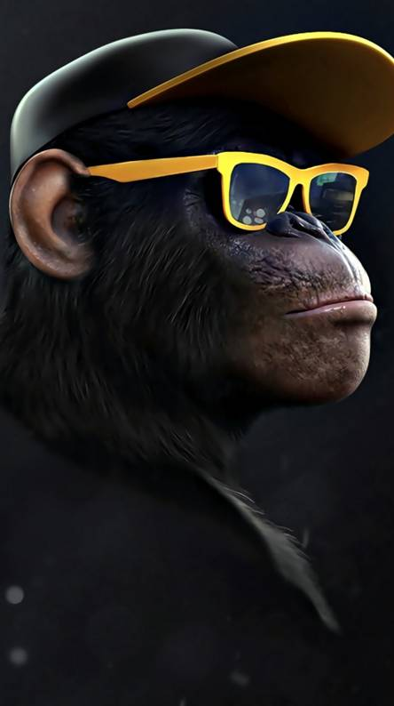 Monkey Ringtones and Wallpapers - Free by ZEDGE™