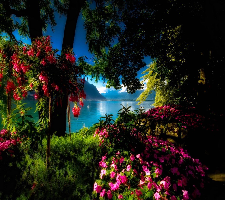 Надписью лиана, анимированные открытки красивая природа