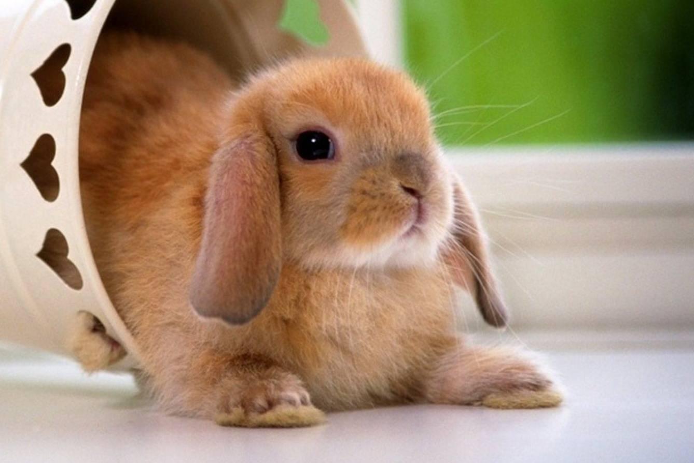 Cutest Rabbit