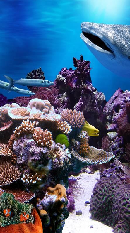 Coral Aqua